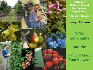 USDA-ARS National Clonal Germplasm Repository Corvallis, Oregon Joseph Postman