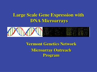 Large Scale Gene Expression with  DNA Microarrays