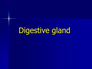 Digestive gland