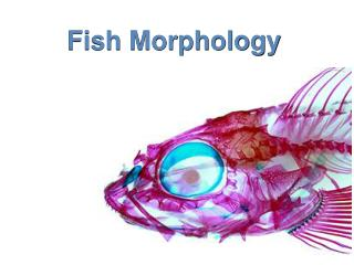 Fish Morphology