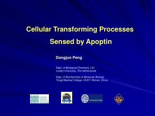 Cellular Transforming Processes  Sensed by Apoptin