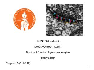 Bi/CNS 150 Lecture 7       Monday October 14, 2013 Structure & function of glutamate receptors