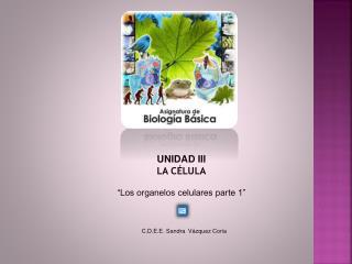 """UNIDAD III LA CÉLULA """"Los organelos celulares parte 1"""""""