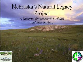 N ebraska's  N atural  L egacy  P roject A blueprint for conserving wildlife  and their habitats