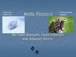 Arctic Foxpard
