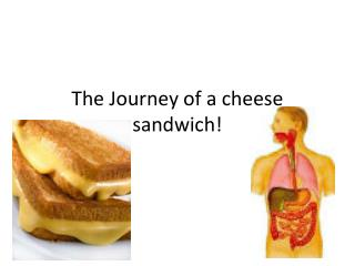 The Journey of a cheese sandwich