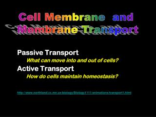 Passive Transport                                What can move into and out of cells?