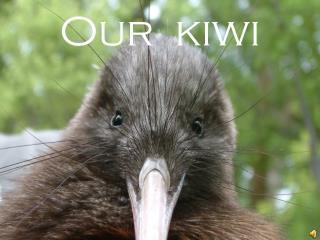 Our  kiwi