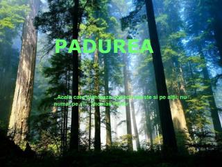"""PADUREA ,,Acela care planteaza copaci iubeste si pe altii, nu numai pe el"""". Thomas Fuller"""