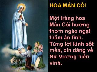 HOA MÂN CÔI