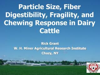 Particle Size, Fiber Digestibility, Fragility, and Chewing Response in Dairy Cattle
