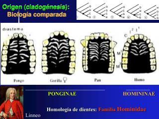 Origen (cladogénesis): Biología comparada