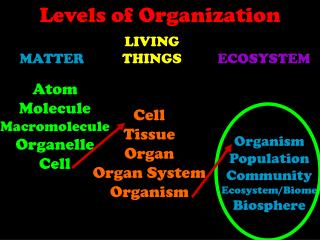 Atom Molecule Macromolecule Organelle Cell