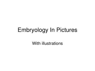 Labor  Delivery Embryology and Fetal Development