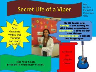 Secret Life of  a  Viper