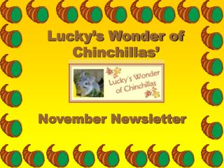 Lucky's Wonder of Chinchillas'