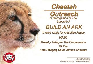 Annie Beckhelling Founder & Director :  Cheetah Outreach