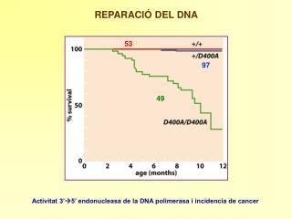 REPARACIÓ DEL DNA