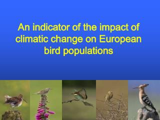 An indicator of the impact of climatic change on European bird populations