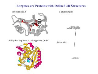 Enzymes are Proteins with Defined 3D Structures