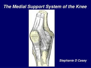 The Medial Support System of the Knee