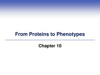 From Proteins to Phenotypes