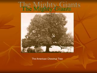 The Mighty Giants