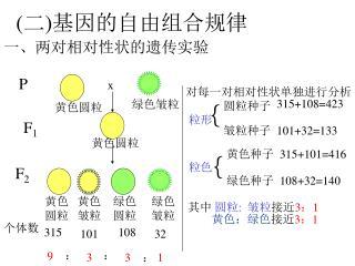 ( 二 ) 基因的自由组合规律