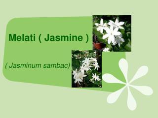 Melati ( Jasmine )
