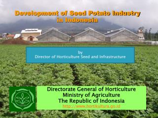 Development of Seed Potato Industry  in Indonesia