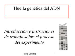 Huella genética del ADN