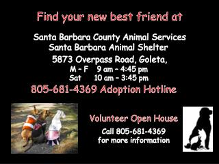 Find your new best friend at Santa Barbara  County Animal Services Santa Barbara Animal  Shelter