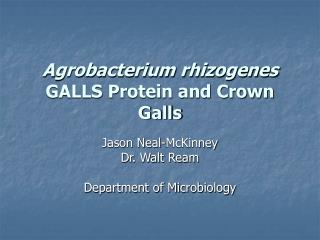 Agrobacterium rhizogenes  GALLS Protein and Crown Galls