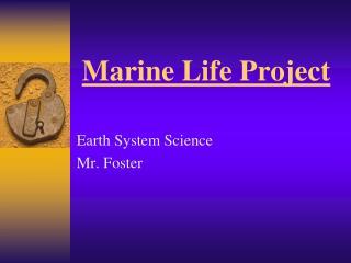 Marine Life Project