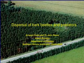 Dispersal of bark beetles and predators