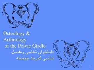 Osteology & Arthrology  of the Pelvic Girdle استخوان شناسی ومفصل شناسی کمربند حوصله