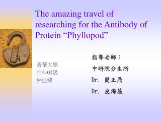 "The amazing travel of researching for the Antibody of Protein ""Phyllopod"""