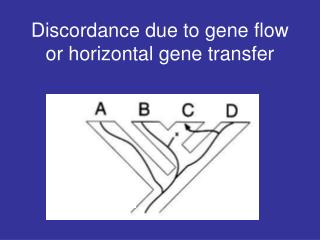 Discordance due to gene flow or horizontal gene transfer
