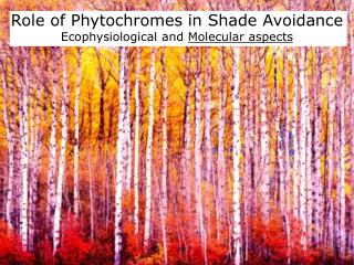 Role of Phytochromes  in  Shade  Avoidance Ecophysiological and  Molecular aspects