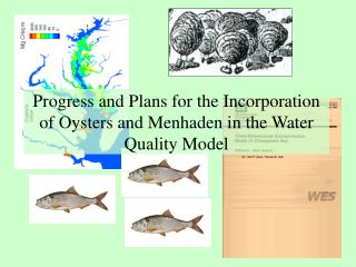 Progress and Plans for the Incorporation of Oysters and Menhaden in the Water Quality Model