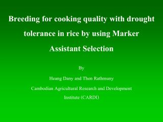 Breeding for cooking quality with drought tolerance in rice by using Marker Assistant Selection