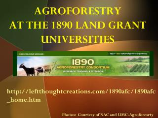 AGROFORESTRY AT THE 1890 LAND GRANT UNIVERSITIES