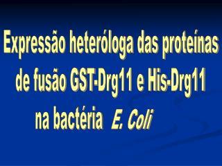 Expressão heteróloga das proteínas  de fusão GST-Drg11 e His-Drg11