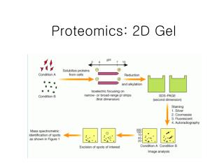 Proteomics: 2D Gel