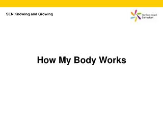 How My Body Works