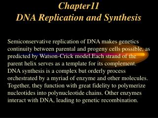 Chapter11 DNA Replication and Synthesis
