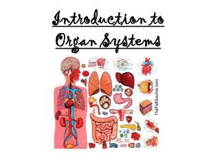 Introduction to  Organ Systems