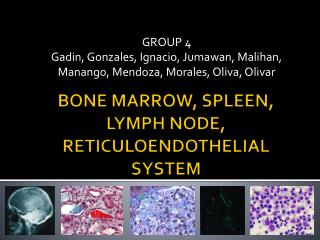 BONE MARROW, SPLEEN, LYMPH NODE, RETICULOENDOTHELIAL SYSTEM