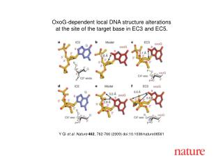 Y Qi  et al. Nature 462 , 762-766 (2009) doi:10.1038/nature08 561