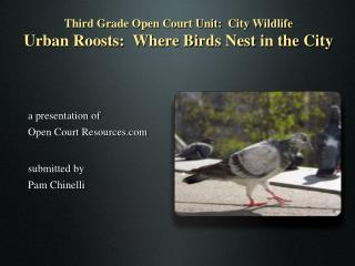 Third Grade Open Court Unit:  City Wildlife Urban Roosts:  Where Birds Nest in the City